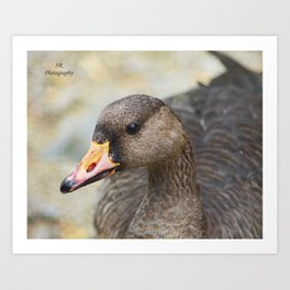 Duck, Duck, Goose Art Print