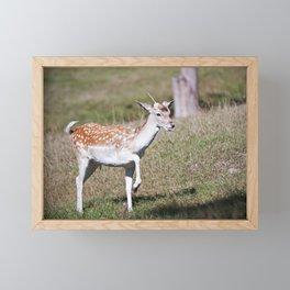 Fallow Deer Fawn 4 Framed Mini Art Print