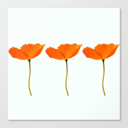 Three Orange Poppy Flowers White Background #decor #society6 #buyart Canvas Print