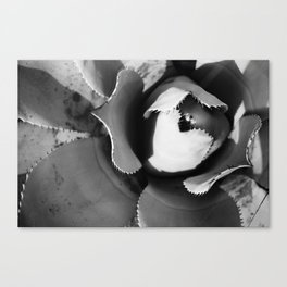 Black and White Agave Canvas Print