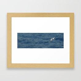 Seagull in Croatia #1 Framed Art Print