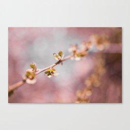 pink blossom 3 Canvas Print