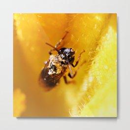 Fuzzy Wet Bee Metal Print