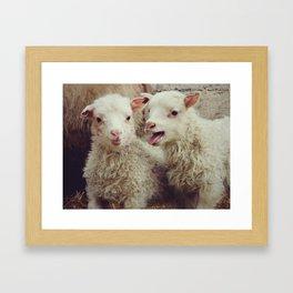 Sheep #4 Framed Art Print