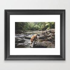 Dog in Summer Two Framed Art Print