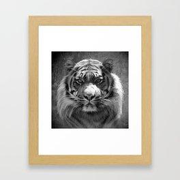 The eye of the tiger II (vintage) Framed Art Print