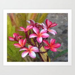 Hawaiian Pink Plumera Art Print