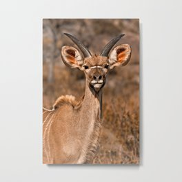 Young Kudu Metal Print