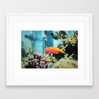 life aquatic Framed Art Prints featuring Life Aquatic by JustAlly