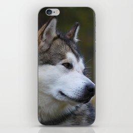 Wolf Husky iPhone Skin