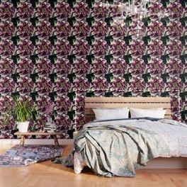 Peony Flower A103 Wallpaper