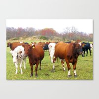 cows Canvas Prints featuring Cows by AstridJN