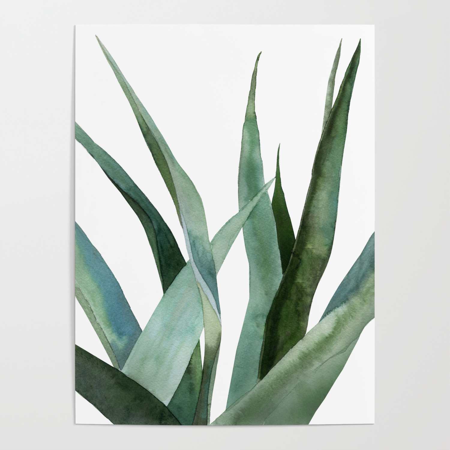 Agave Plants Poster By Asolo Society6