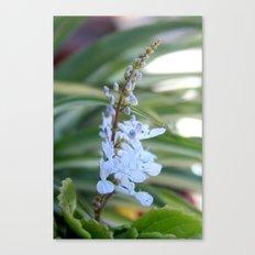 Dollar flower Canvas Print