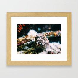 Fishy Fish Framed Art Print