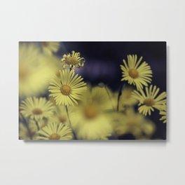 Little Leo Flower - Great Leopard's Bane Metal Print