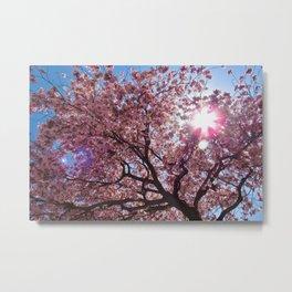 Pink Trumpet Flower Tree Metal Print