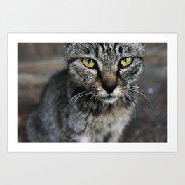 Cat on Duty Art Print