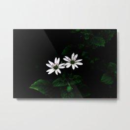 Botanical Still Life Little White Flowers Metal Print