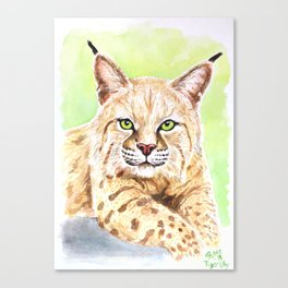 Tiger Lilly Bobcat Canvas Print