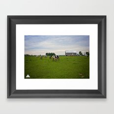 Classic Cows 2 of 2 Framed Art Print