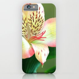 Beautiful Lillies iPhone Case