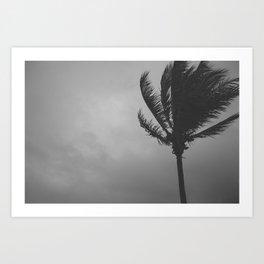 Wind Blown Art Print
