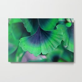Ginkgo leaf Metal Print