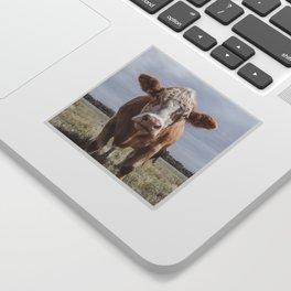 Animal Photography | Highland Cow Portrait Photography | Farm animals Sticker