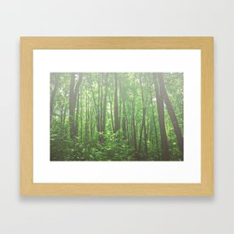 Soft Forest II Framed Art Print