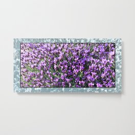 SPANISH LAVENDER AND ONE BEE Metal Print