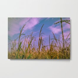 Corn Tassel Metal Print