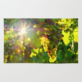 Wine Grapes in the Sun Rug