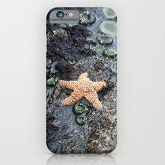 Starfish - La Push iPhone 6 Slim Case