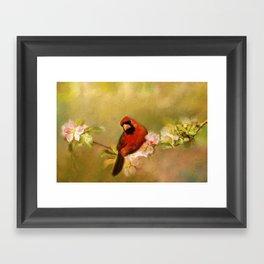 Cardinal of Spring Framed Art Print