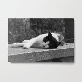 Cat in black & white Metal Print