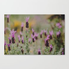 Smell the Lavender Canvas Print