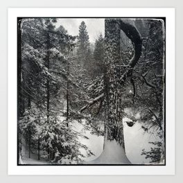 Winter white pine Art Print