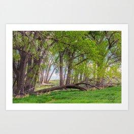 Cottonwoods at Lee's Farm 2 Art Print