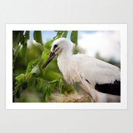 Orphaned one White Stork Art Print