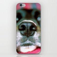 Dog tired iPhone & iPod Skin
