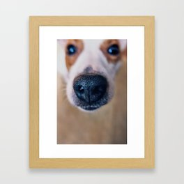 Dog face 2 Framed Art Print