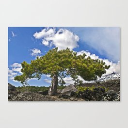 Pine Tree on the Ground of the Mount Etna Canvas Print