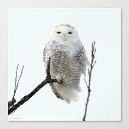 Snowy in the Wind (Snowy Owl 2) Canvas Print