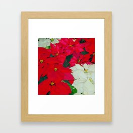 Poinsettias, Olbrich, 5345 Framed Art Print