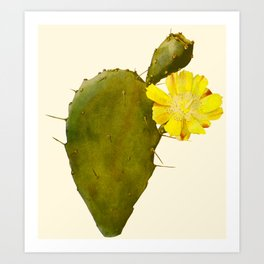 Blossoming Prickly Pear cactus Art Print