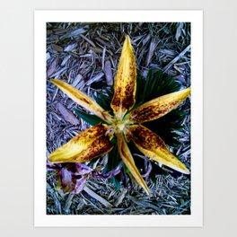 """""""Garden Flower"""" Art Print"""