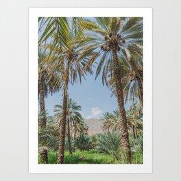 Date Palm Trees in Oman #3 Art Print