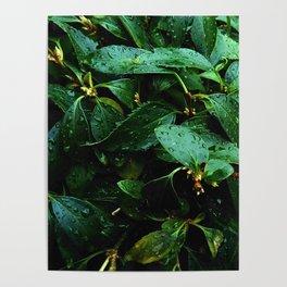 Greenery and leaf II Poster