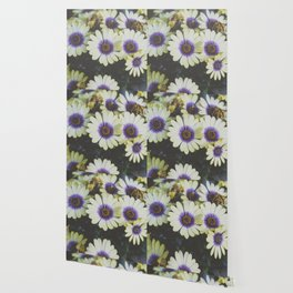 African Daisy Wallpaper
